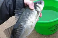 Session Bassin Min�ralier (09-03-13)